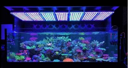 Вода для аквариума: особенности и решения